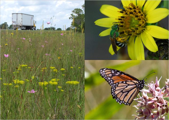 Roadside best management practices that benefit pollinators.